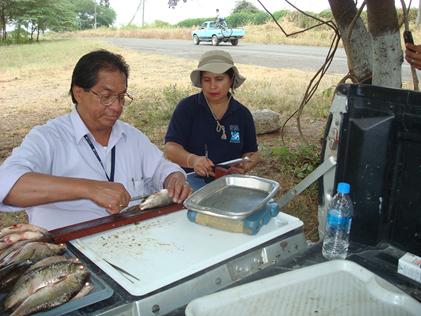 El Tecnólogo José Luis Pacheco del INP, registra datos biológicos de las especies capturadas en el Embalse Chongón.