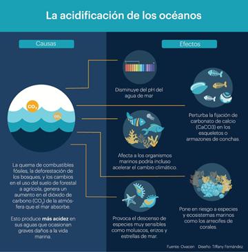 La Acidificación Oceánica Un Problema De Todos Que Debemos Abarcar De Forma Responsable Instituto Nacional De Pesca