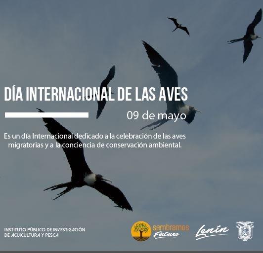 3. Dia internacional de las aves (09 de mayo)